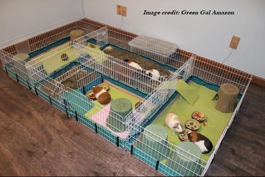Guinea Pig DIY's